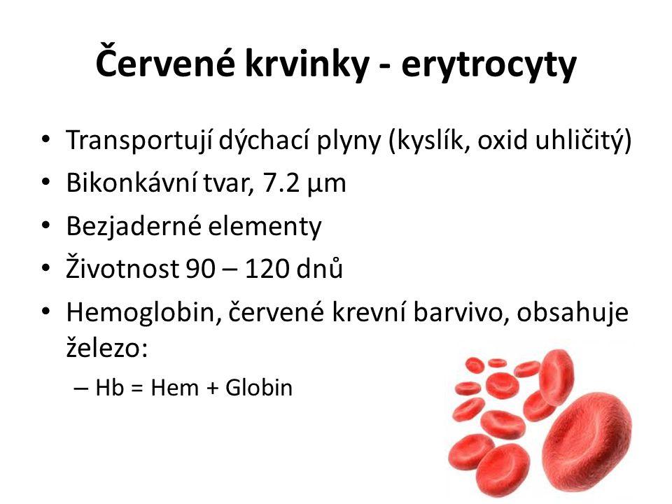Červené krvinky - erytrocyty