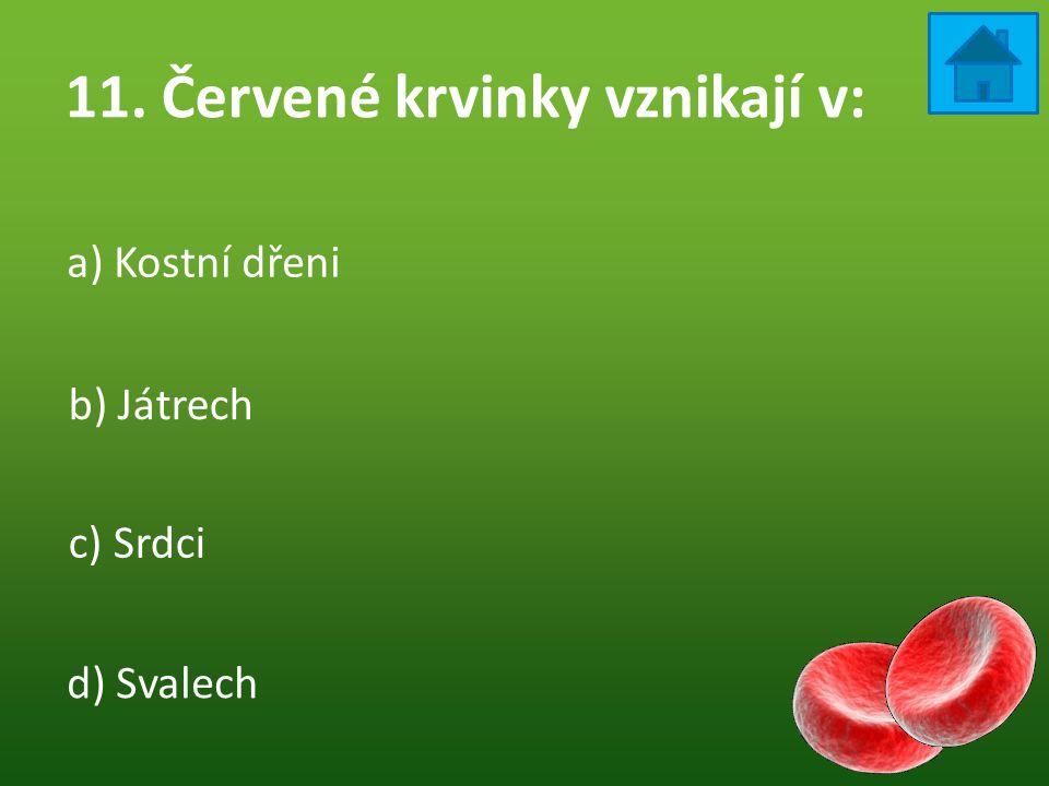 11. Červené krvinky vznikají v:
