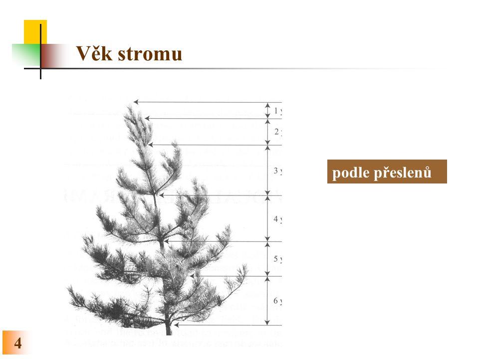 Věk stromu podle přeslenů