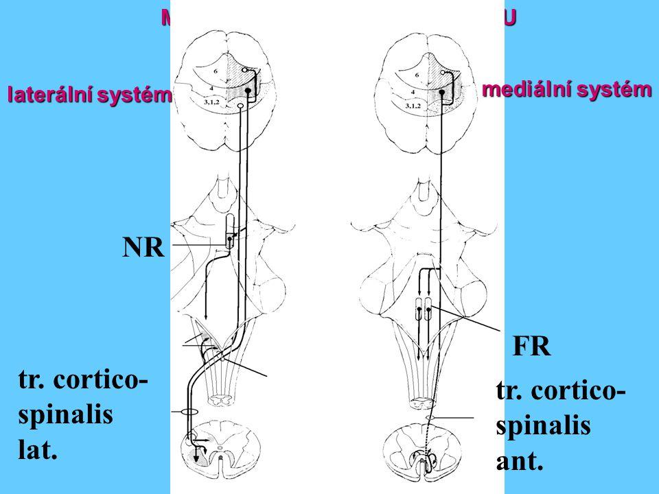 NR FR tr. cortico- tr. cortico- spinalis spinalis lat. ant.