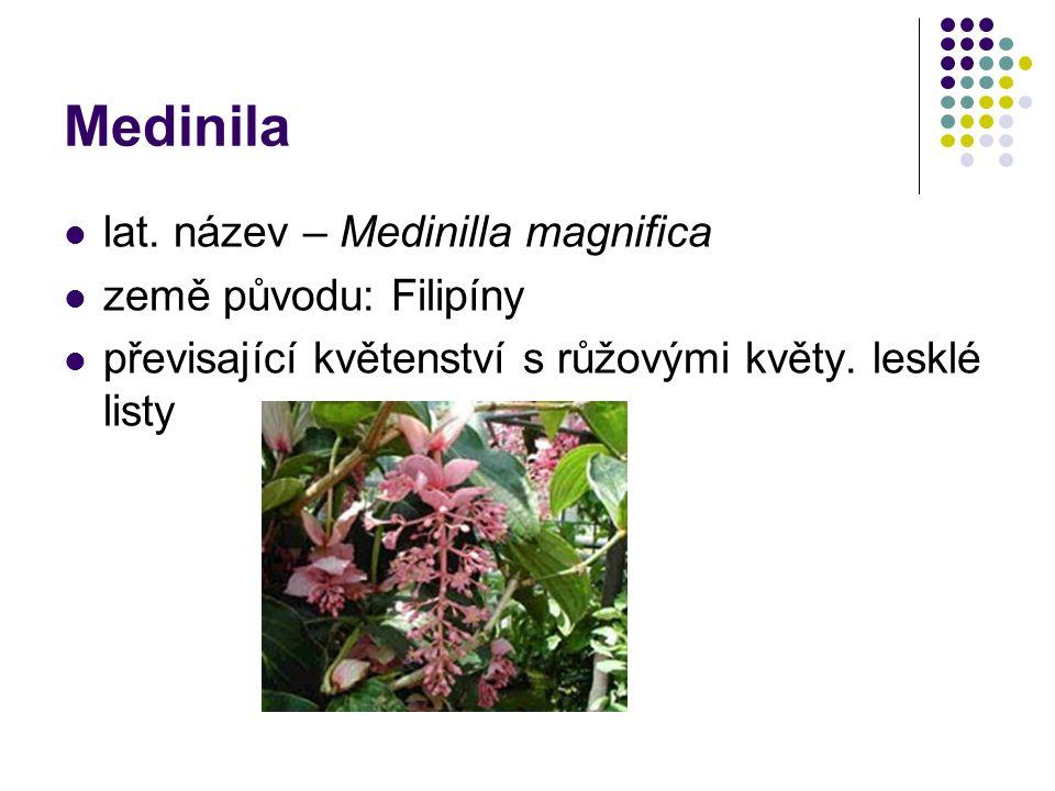 Medinila lat. název – Medinilla magnifica země původu: Filipíny