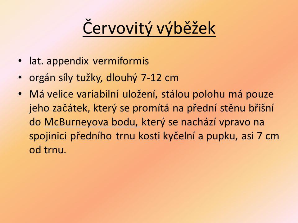 Červovitý výběžek lat. appendix vermiformis