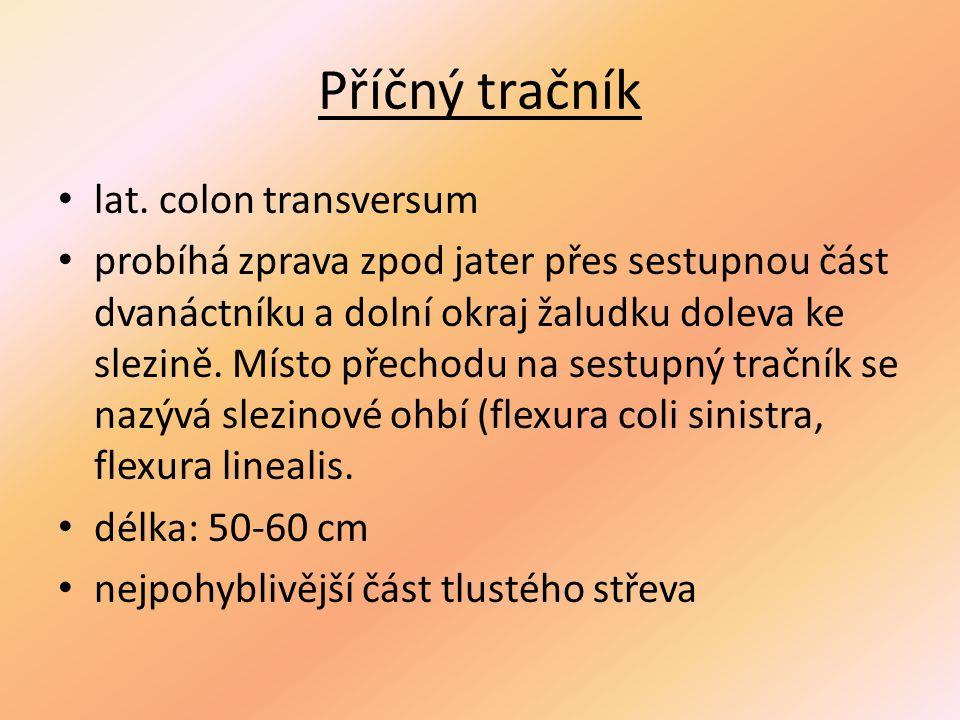 Příčný tračník lat. colon transversum