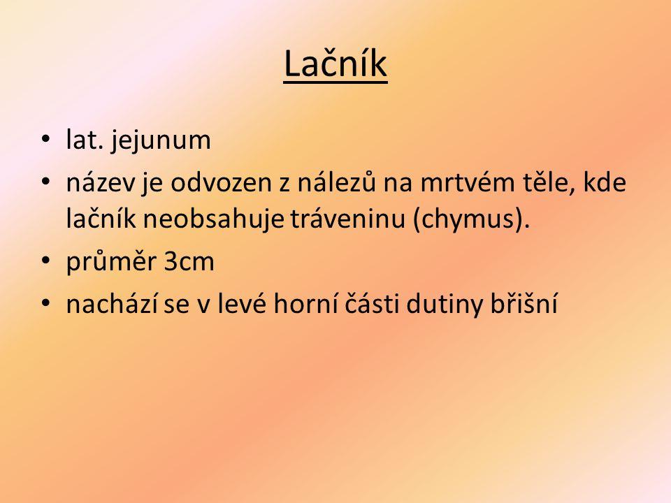 Lačník lat. jejunum. název je odvozen z nálezů na mrtvém těle, kde lačník neobsahuje tráveninu (chymus).