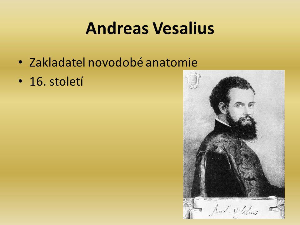 Andreas Vesalius Zakladatel novodobé anatomie 16. století