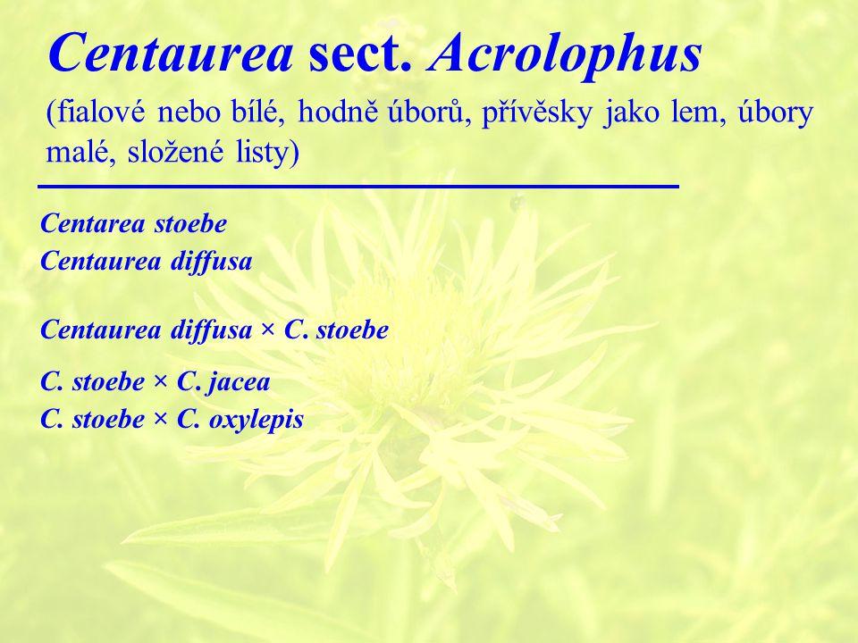 Centaurea sect. Acrolophus