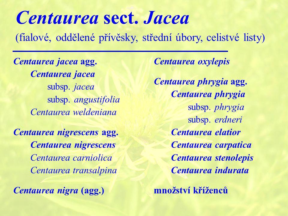 Centaurea sect. Jacea (fialové, oddělené přívěsky, střední úbory, celistvé listy) Centaurea jacea agg.
