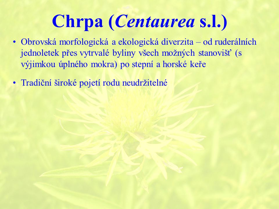 Chrpa (Centaurea s.l.)