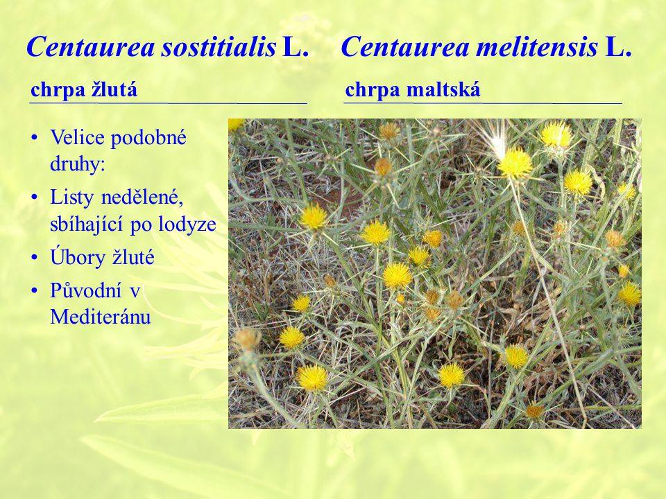 Centaurea sostitialis L. Centaurea melitensis L.