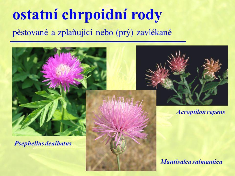 ostatní chrpoidní rody