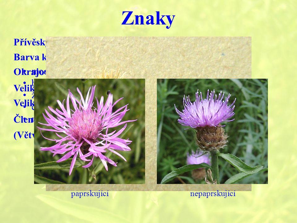 Znaky Přívěsky zákrovních listenů Barva květů Okrajové květy