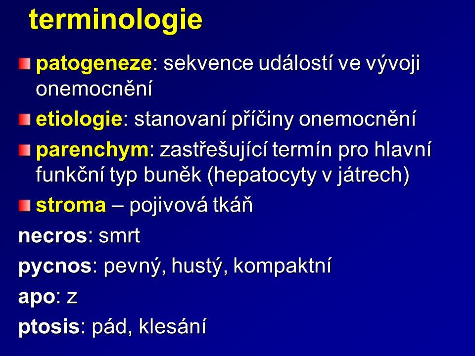 terminologie patogeneze: sekvence událostí ve vývoji onemocnění