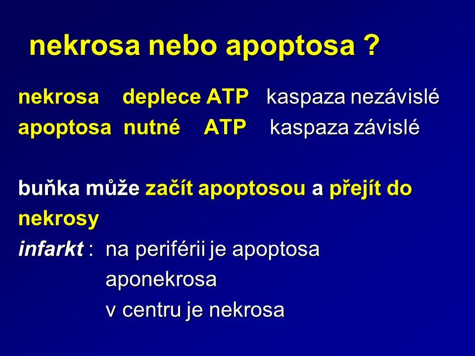nekrosa nebo apoptosa nekrosa deplece ATP kaspaza nezávislé