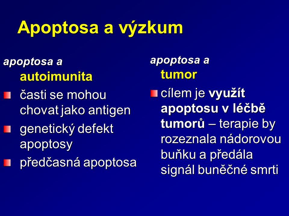 Apoptosa a výzkum apoptosa a autoimunita. časti se mohou chovat jako antigen. genetický defekt apoptosy.