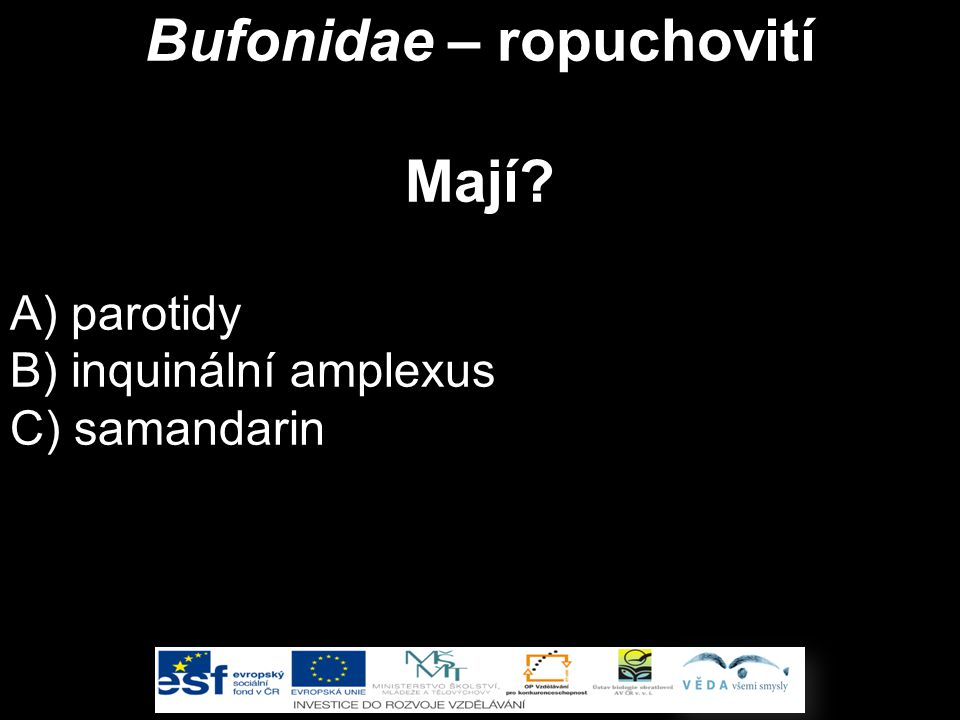 Bufonidae – ropuchovití