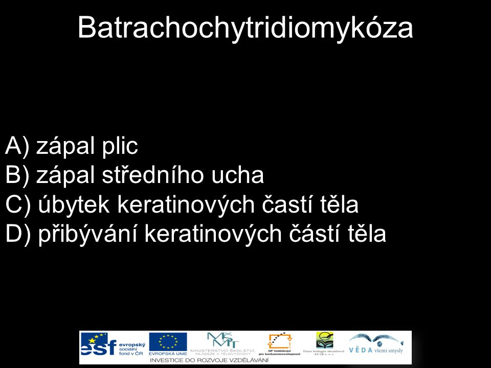 Batrachochytridiomykóza