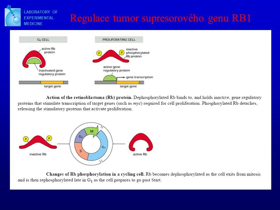 Regulace tumor supresorového genu RB1