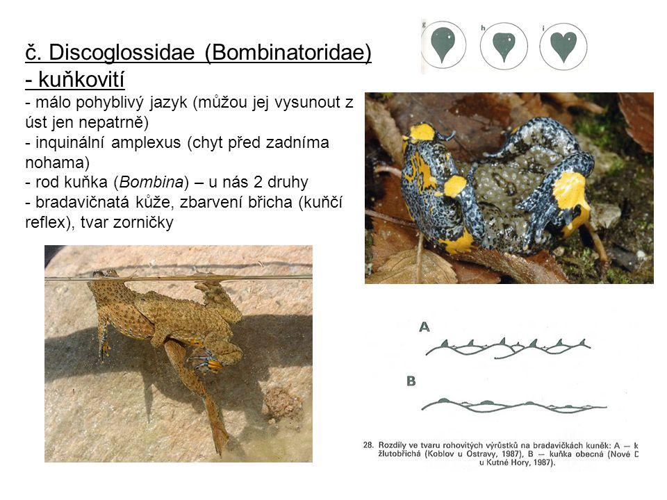 č. Discoglossidae (Bombinatoridae) - kuňkovití