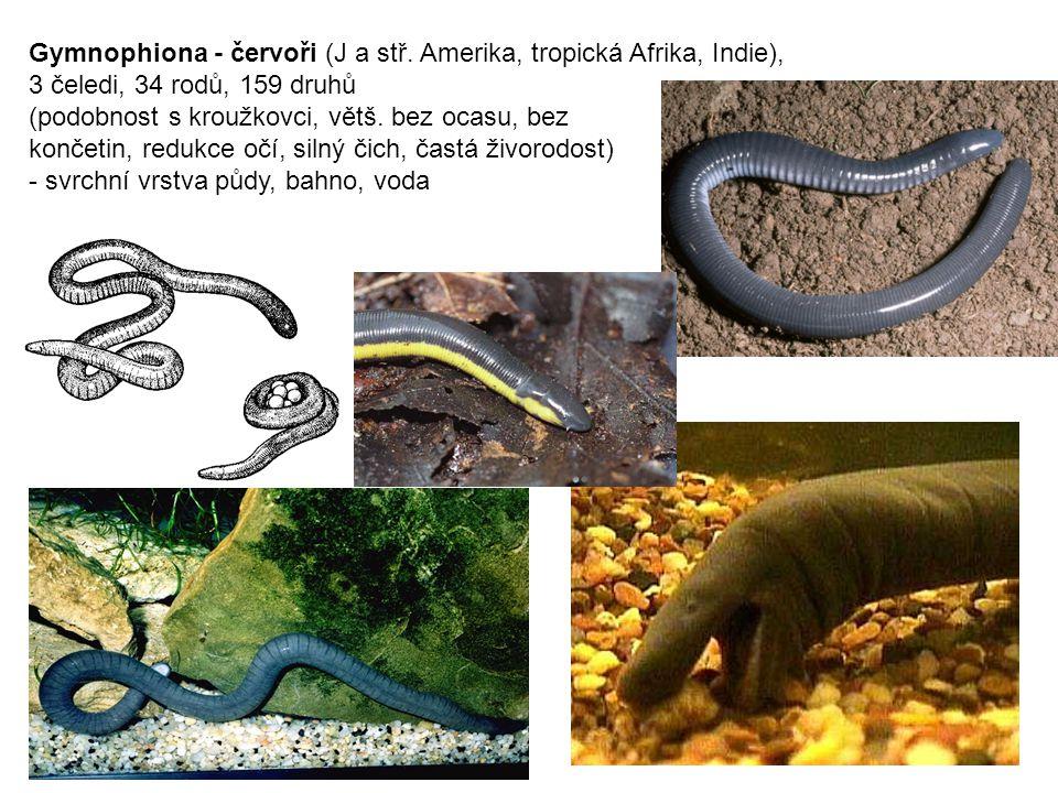 Gymnophiona - červoři (J a stř. Amerika, tropická Afrika, Indie),