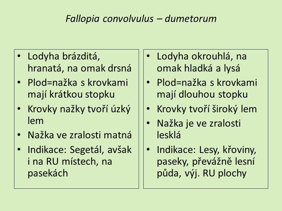 Fallopia convolvulus – dumetorum
