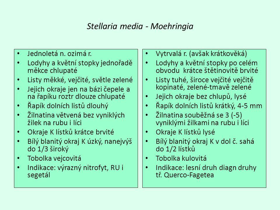 Stellaria media - Moehringia