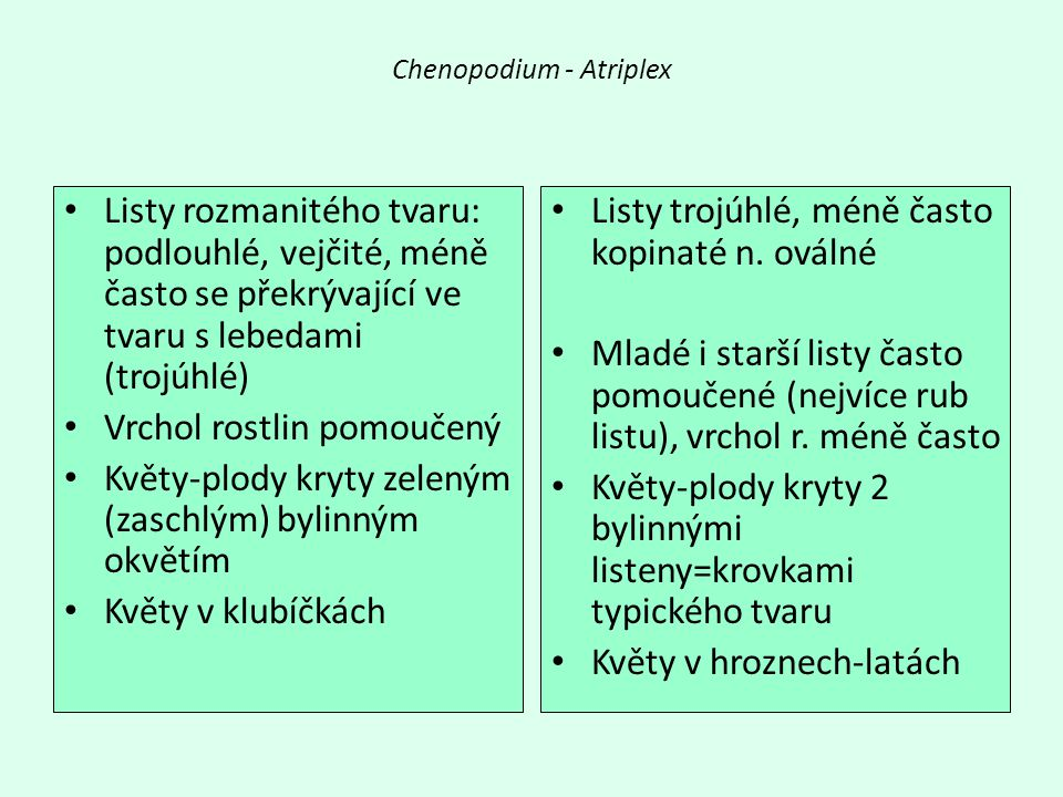 Chenopodium - Atriplex