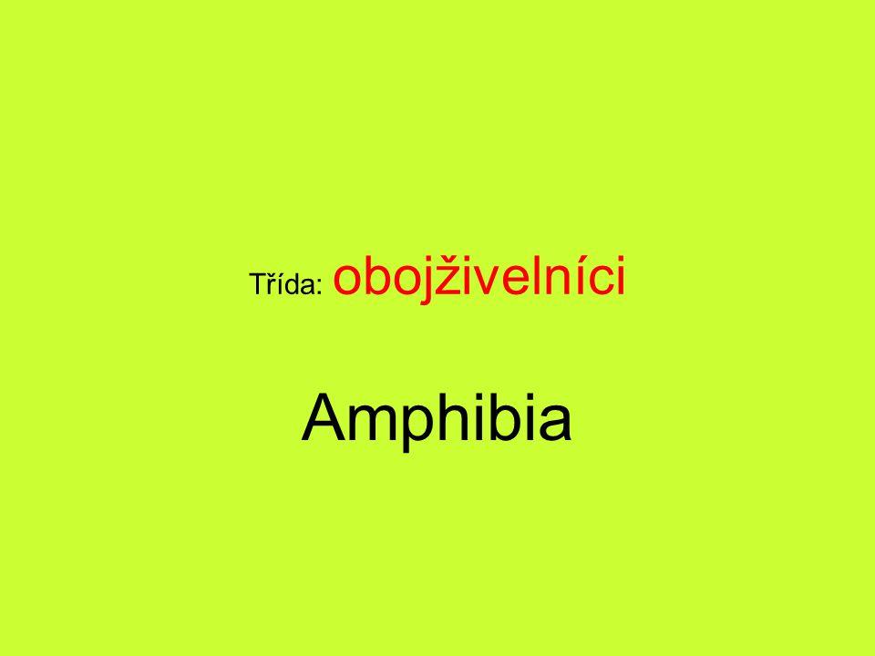 Třída: obojživelníci Amphibia