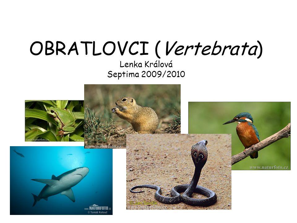 OBRATLOVCI (Vertebrata) Lenka Králová Septima 2009/2010
