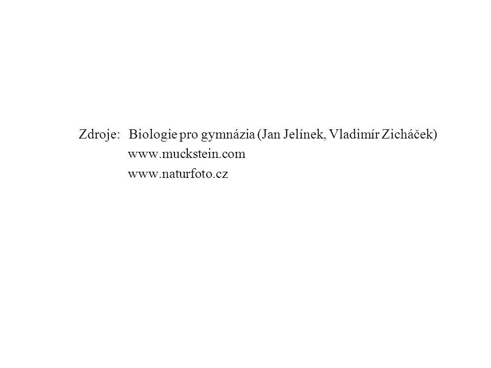 Zdroje: Biologie pro gymnázia (Jan Jelínek, Vladimír Zicháček)