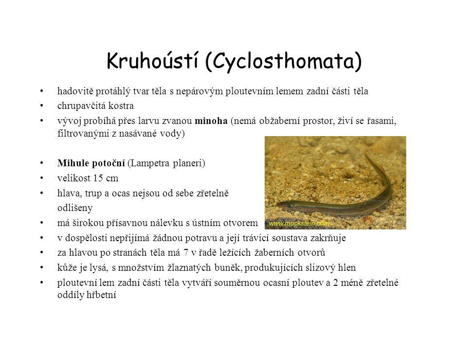 Kruhoústí (Cyclosthomata)