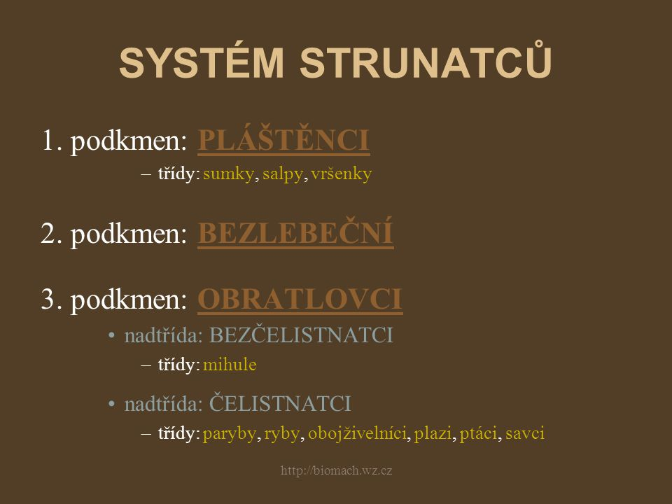 SYSTÉM STRUNATCŮ 1. podkmen: PLÁŠTĚNCI 2. podkmen: BEZLEBEČNÍ