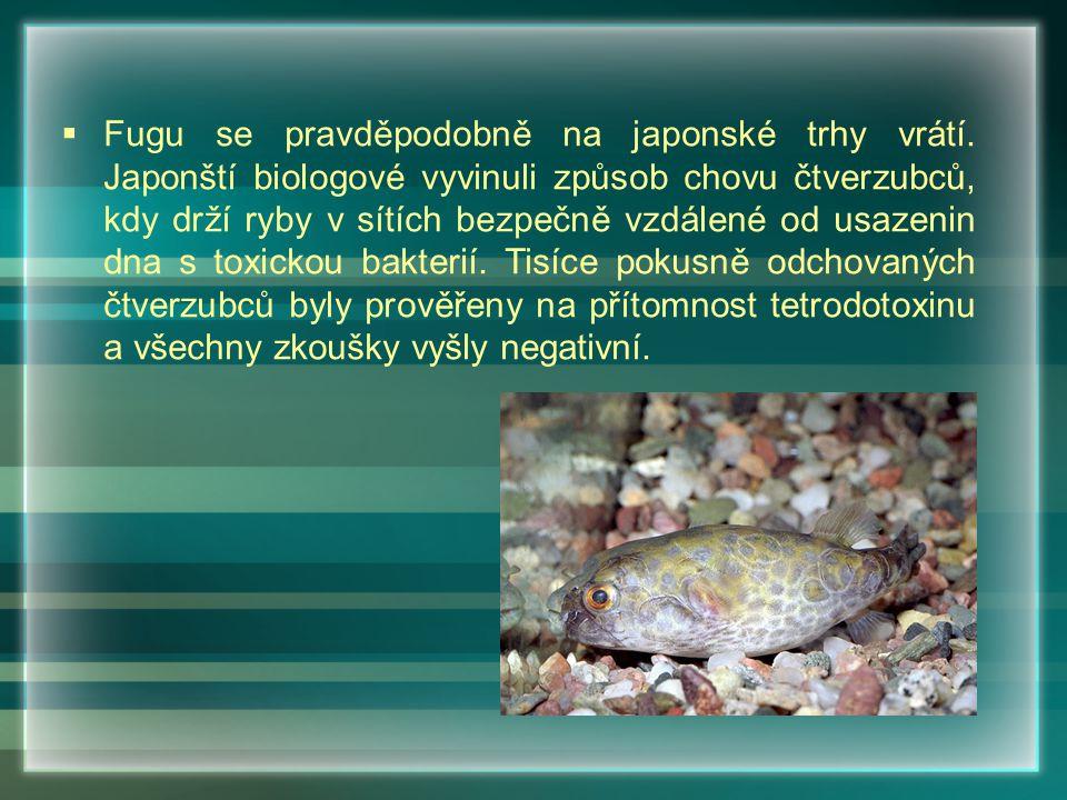 Fugu se pravděpodobně na japonské trhy vrátí