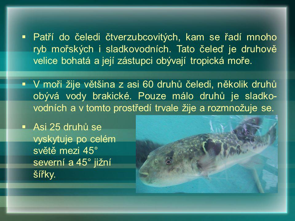 Patří do čeledi čtverzubcovitých, kam se řadí mnoho ryb mořských i sladkovodních. Tato čeleď je druhově velice bohatá a její zástupci obývají tropická moře.