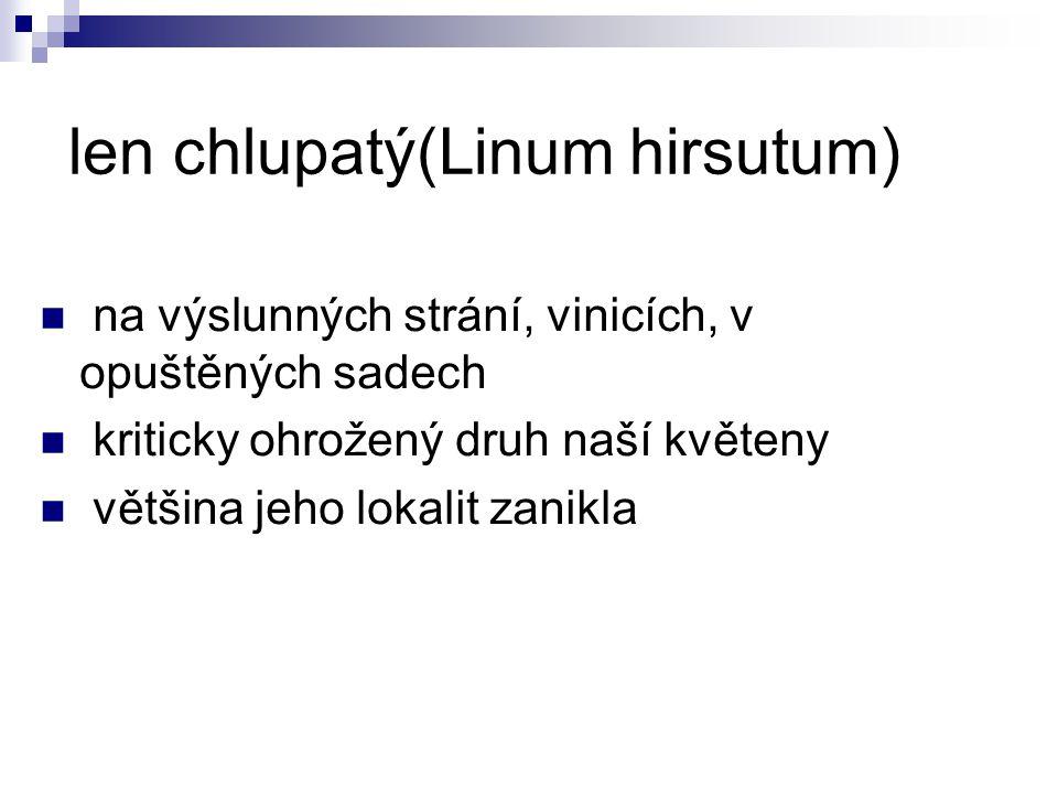 len chlupatý(Linum hirsutum)