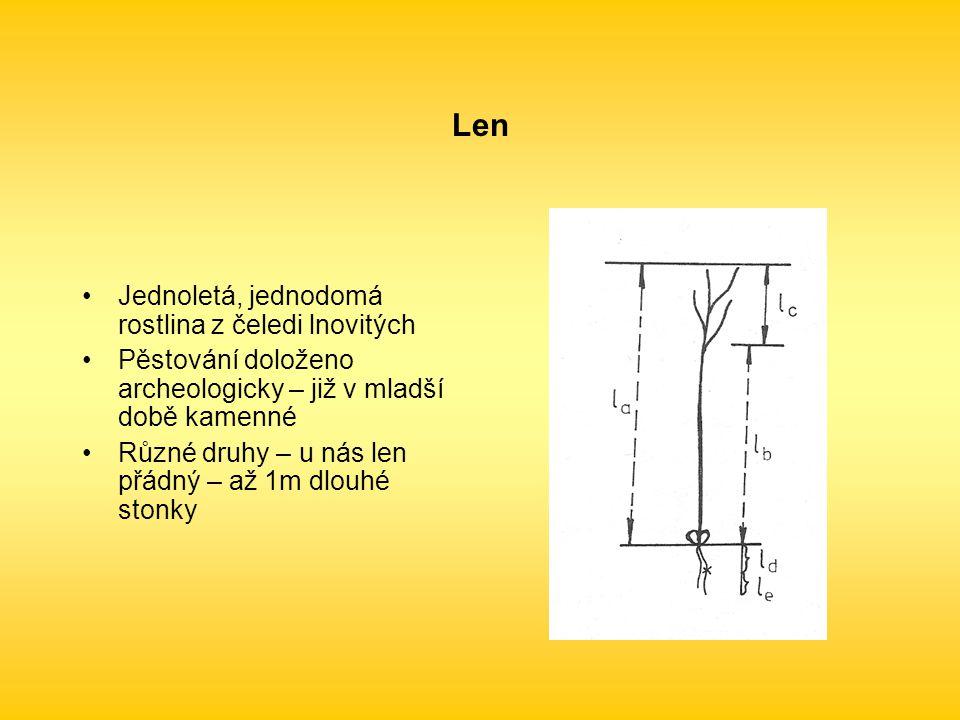 Len Jednoletá, jednodomá rostlina z čeledi lnovitých