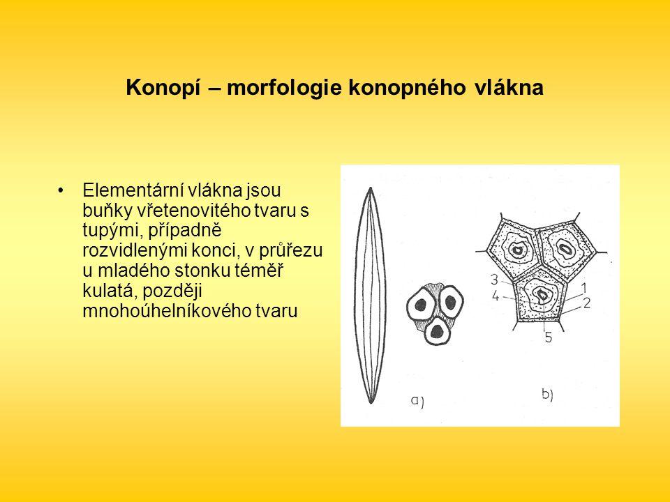 Konopí – morfologie konopného vlákna