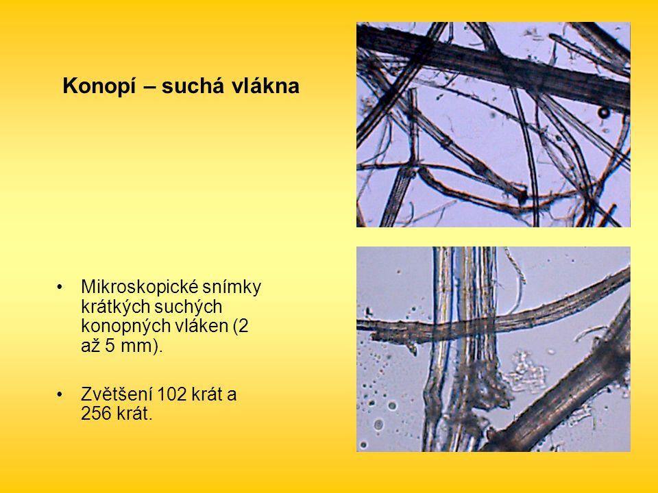 Konopí – suchá vlákna Mikroskopické snímky krátkých suchých konopných vláken (2 až 5 mm).