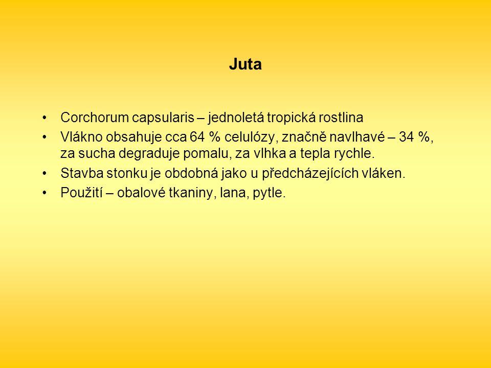 Juta Corchorum capsularis – jednoletá tropická rostlina
