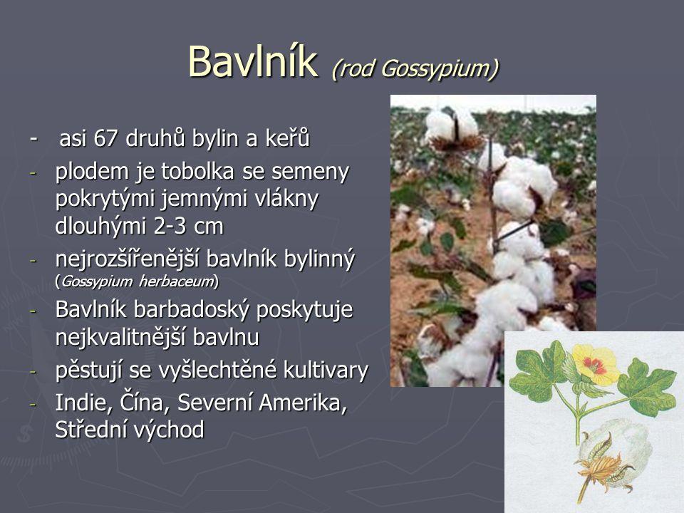 Bavlník (rod Gossypium)
