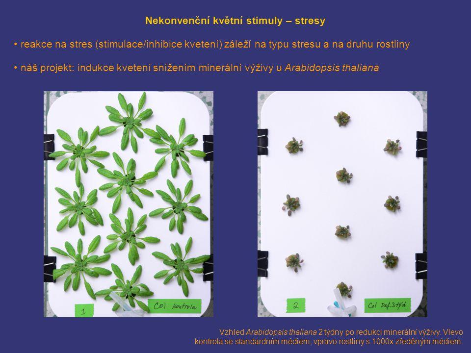 Nekonvenční květní stimuly – stresy