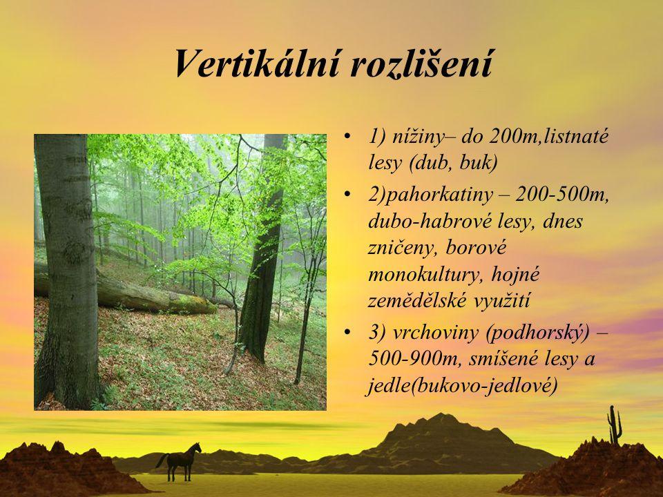 Vertikální rozlišení 1) nížiny– do 200m,listnaté lesy (dub, buk)