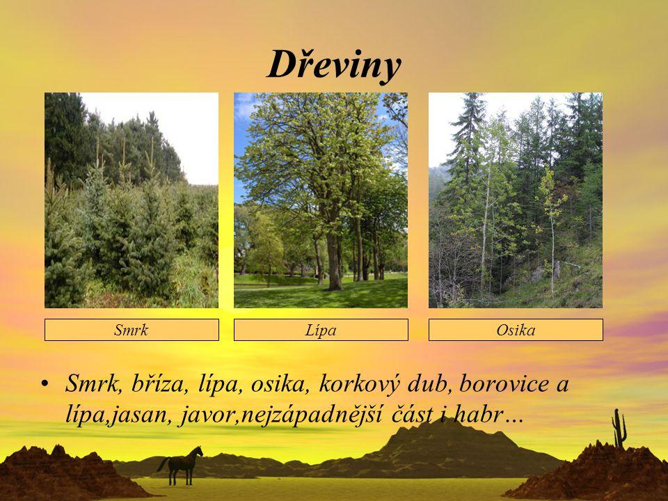 Dřeviny Smrk, bříza, lípa, osika, korkový dub, borovice a lípa,jasan, javor,nejzápadnější část i habr…