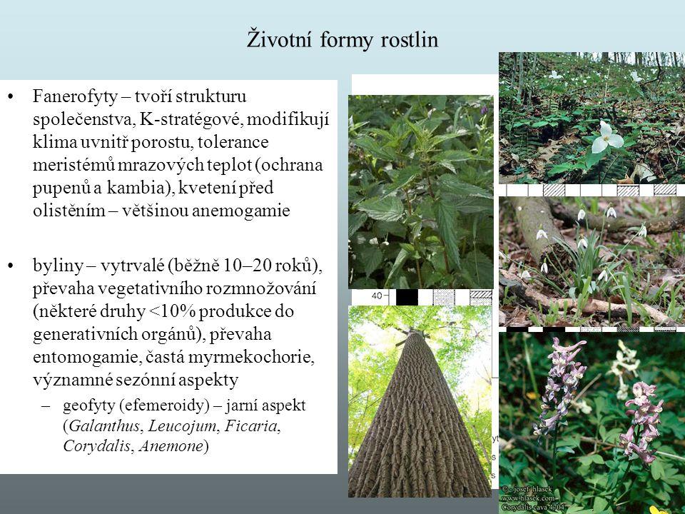 Životní formy rostlin
