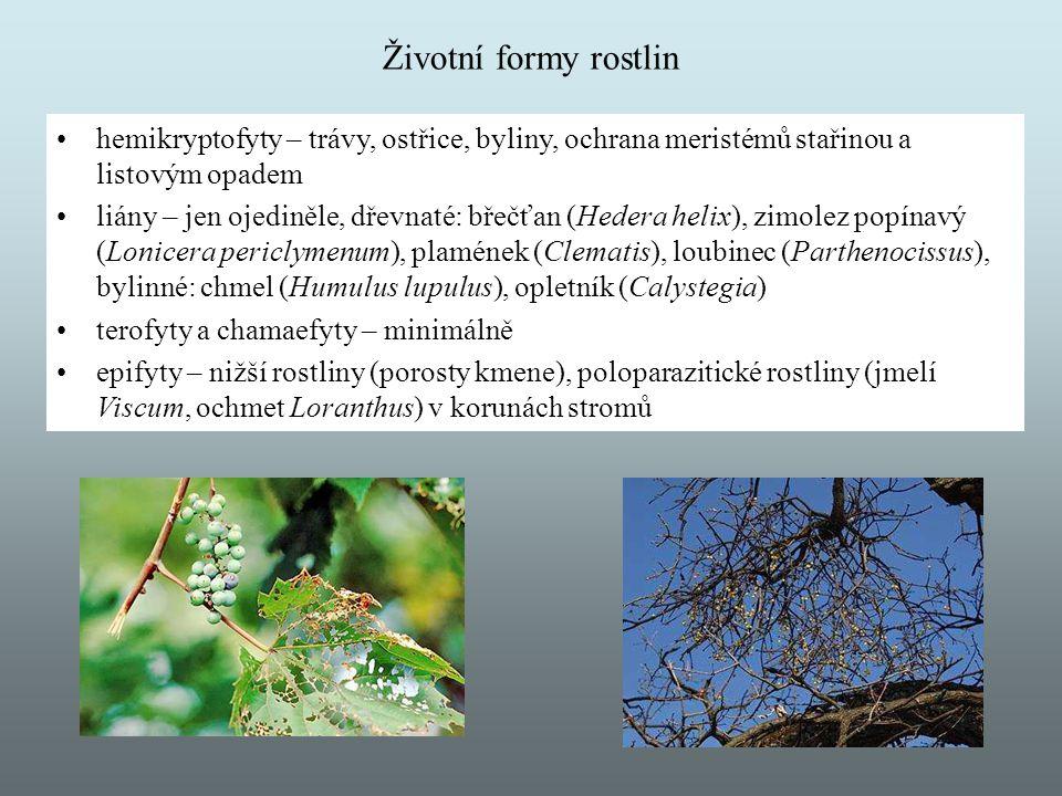 Životní formy rostlin hemikryptofyty – trávy, ostřice, byliny, ochrana meristémů stařinou a listovým opadem.
