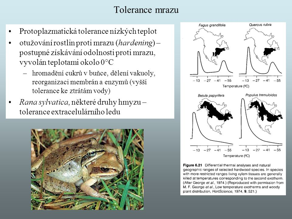 Tolerance mrazu Protoplazmatická tolerance nízkých teplot