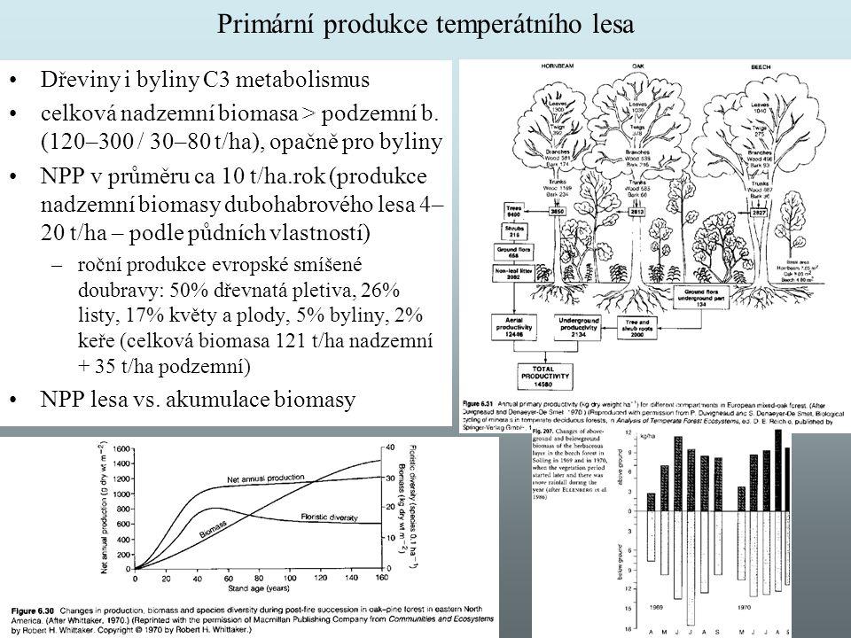 Primární produkce temperátního lesa