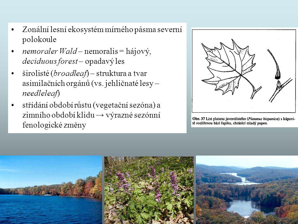 Zonální lesní ekosystém mírného pásma severní polokoule