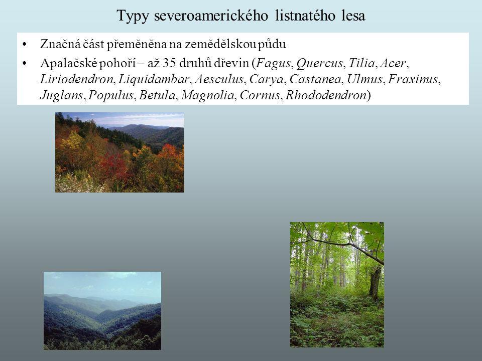 Typy severoamerického listnatého lesa