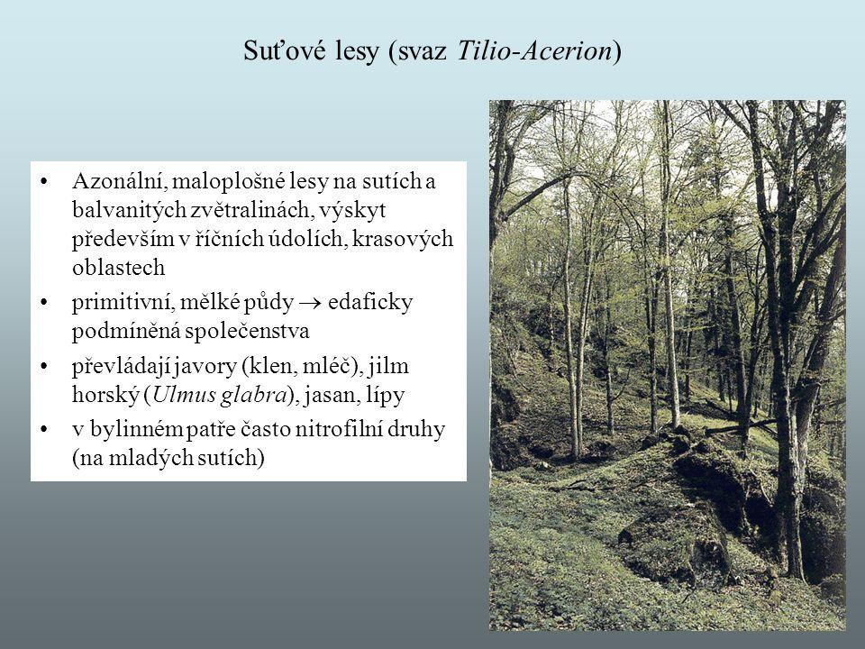 Suťové lesy (svaz Tilio-Acerion)
