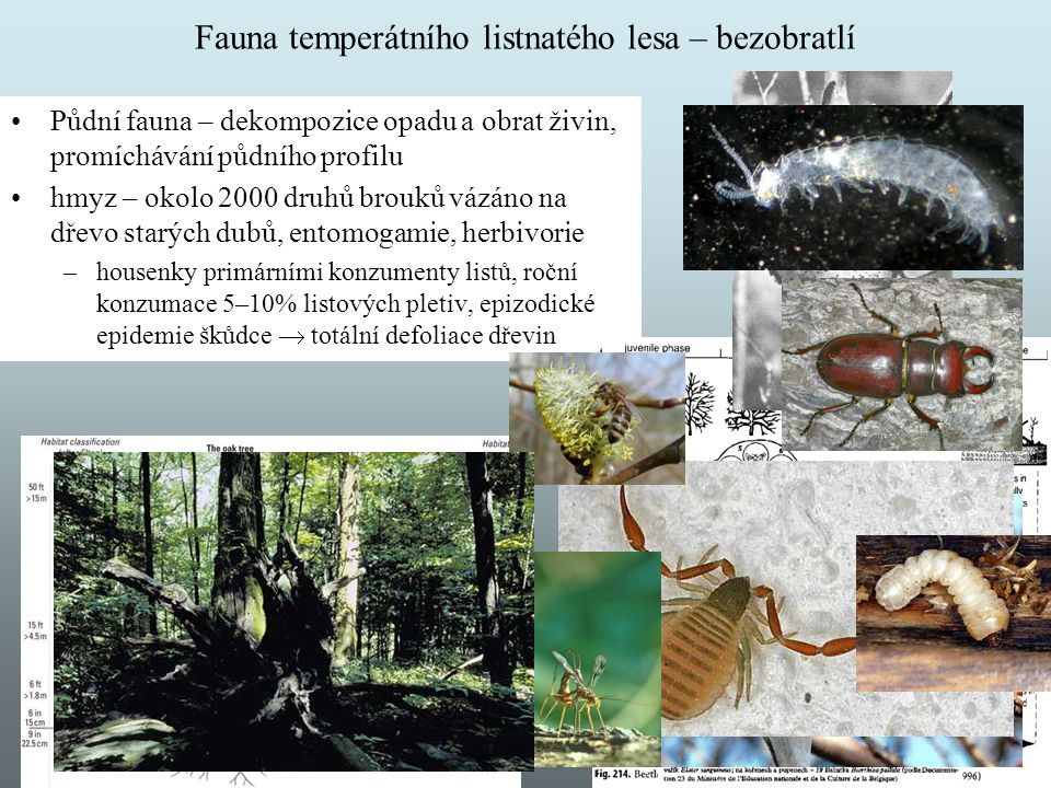 Fauna temperátního listnatého lesa – bezobratlí
